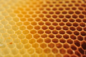 bee wax clay